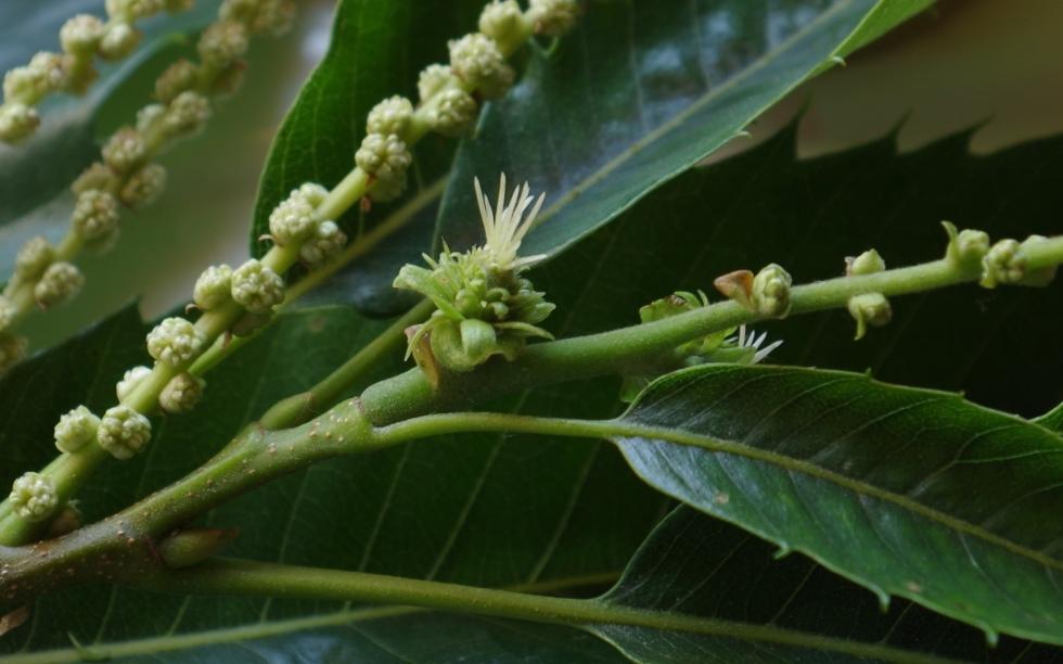 fleur femelle ch